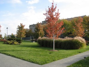 Joslyn Natural Lawn
