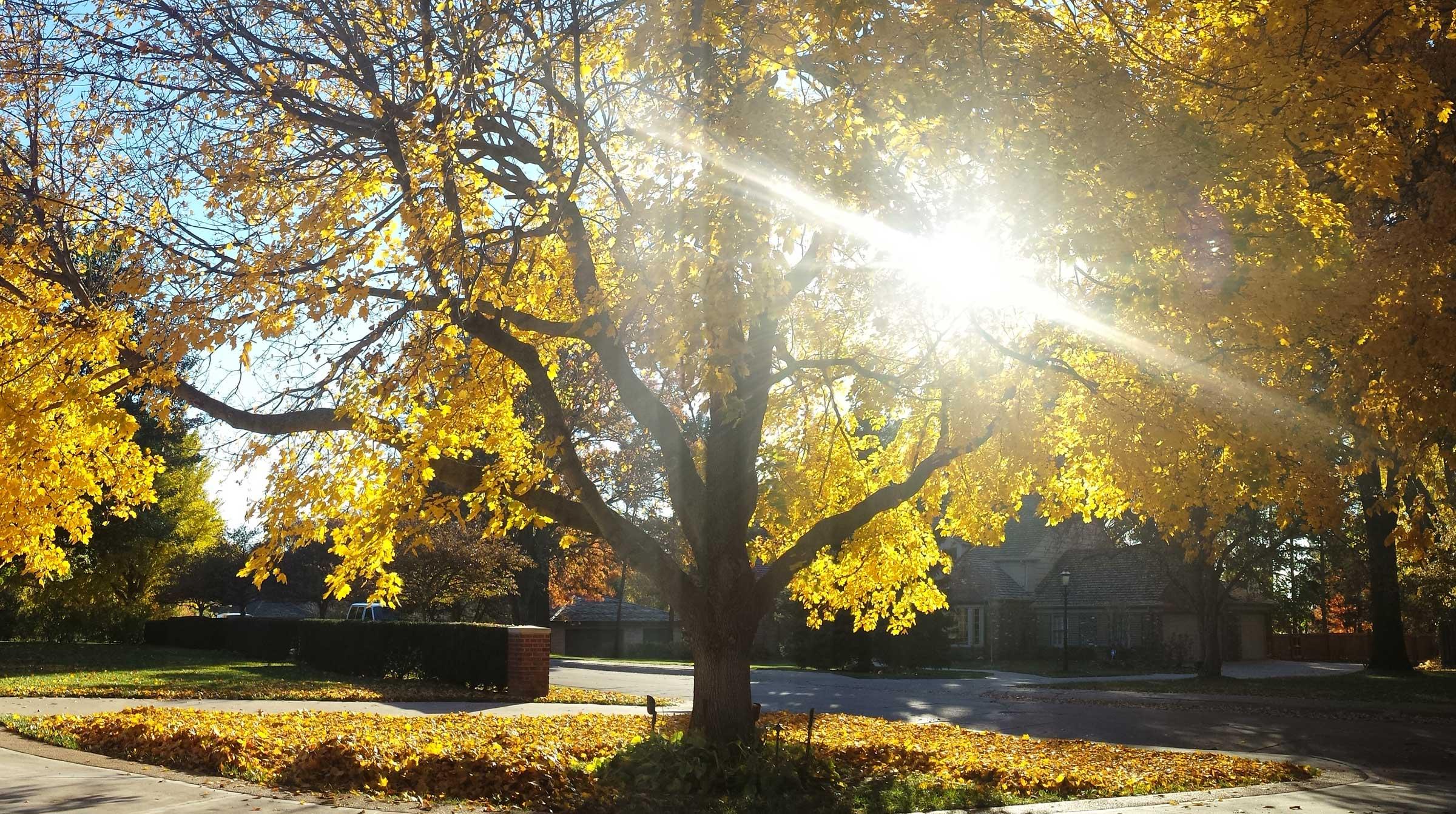 Fall Clean Up - Leaf Mulching Services - Omaha Organics ...