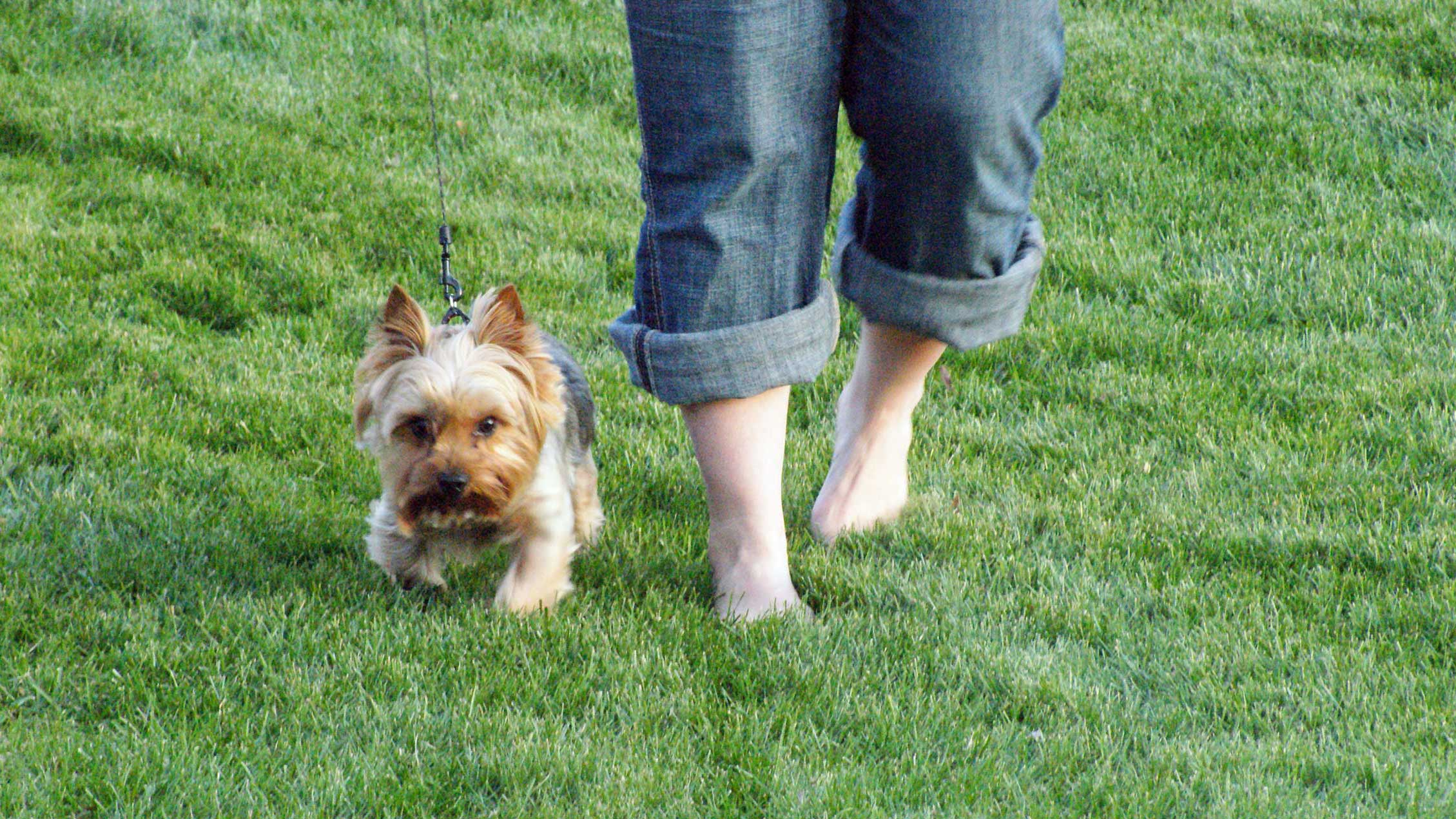 Feet and Dog in Grass