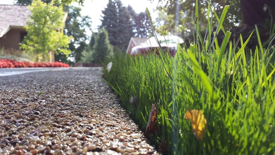 New Seed Growth Turf Renovation