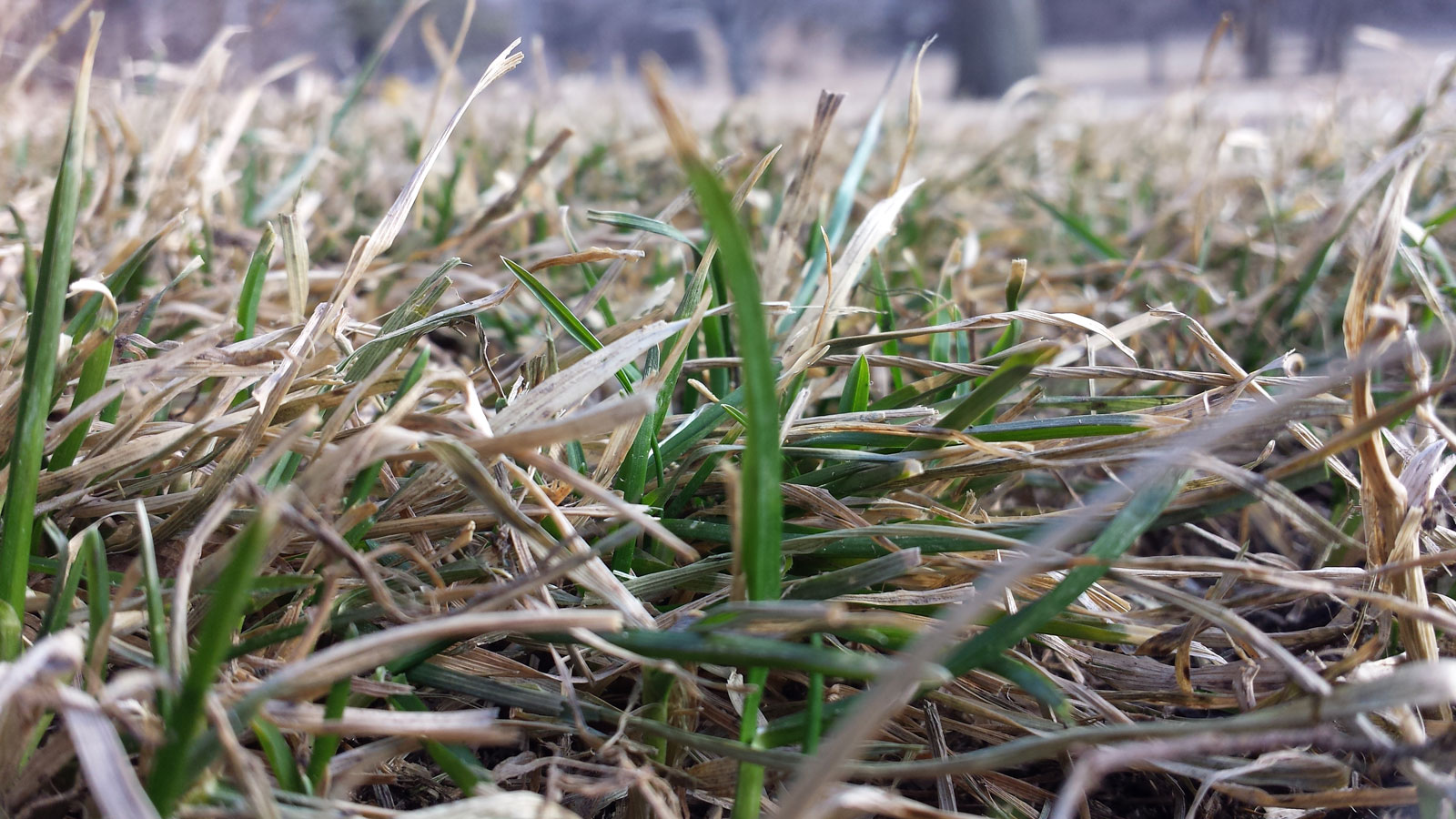 Spring Dormant Grass In March Omaha Organics Lawn