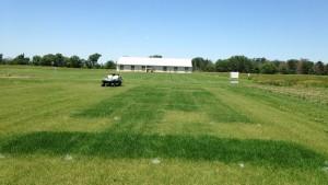UNL Test Plot Mead June 2015 - Alfalfa Fertilizer