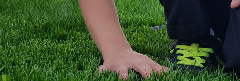 Fescue Turfgrasses